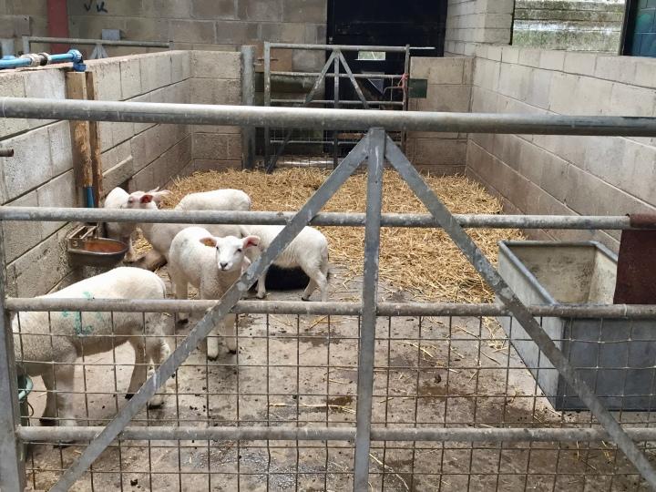 Amelia Trust Farm 3