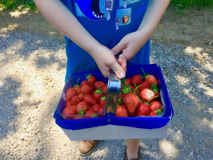hendrewennol basket of strawberries held